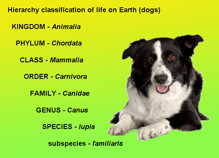 Scientific Name Of Dog And Cat