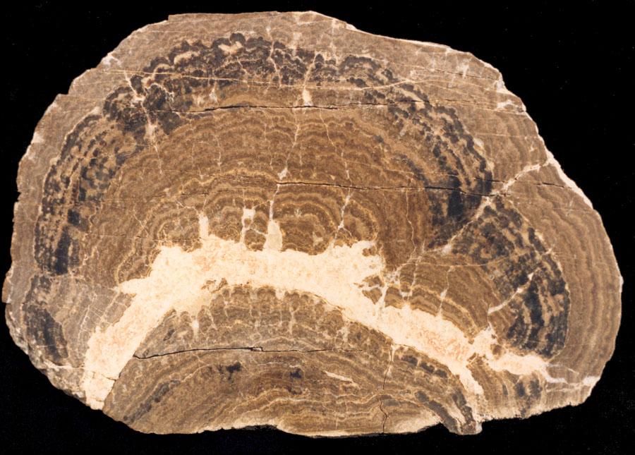 Precambrian/Life origins