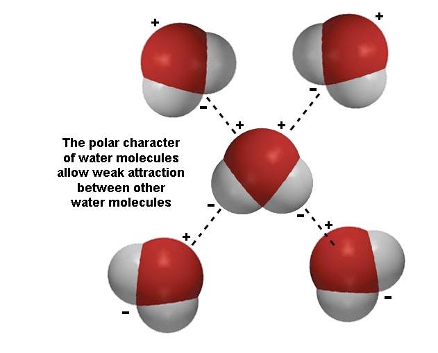 how many bonds does oxygen form