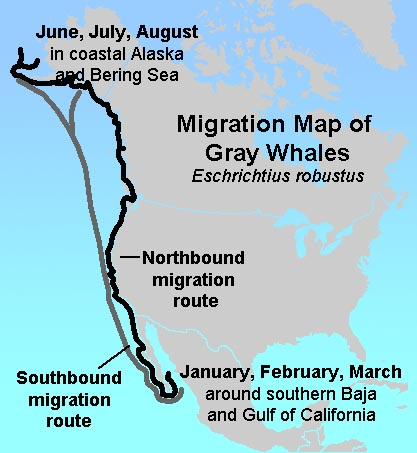 gotbooks.miracosta.edu/oceans Killer Whale Migration Route Maps on bird migration route maps, manatee migration route maps, hummingbird migration route maps, killer whale migration route washington, killer whales orcas migration routes, humpback whale migration route maps, great white shark migration pattern maps, killer whales migrating path, killer worm harness walleye,